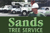 Coupon Offer: $50 OFF Tree Job